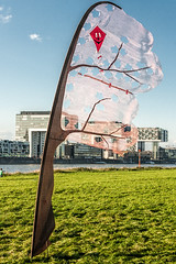 IMG_4040 (rjenniches) Tags: kite cologne kln rhine rhein drachen gleitschirm pollerwiesen gleitschirmfliegen kiteflag drachenflagge