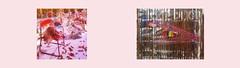 """Diary Tapestry 1. Jänner 2016 Found let off fireworks Pagoda / Daniel Spoerri """"Schöne Bescherung"""" (""""Nice handing out of presents at Christmas"""", """"A nice mess"""") Tagebuch Teppich: Neujahr gefundene abgebrannte Feuerwerkskörper Fontäne  / Glas Würfel MQ (hedbavny) Tags: vienna wien winter red white green rot window austria mirror design österreich sylvester nacht fenster spiegel diary innenhof tapis warp schaufenster tape mq envelope grün küche weaver tagebuch silvester find bau neujahr scull weber hof glaswürfel loom tapestry vitrine teppich museumsquartier feuerwerk fund kette pagode bescherung jahreswechsel böller hausbau webstuhl workingroom analogie werkstatt tapisserie fontäne knaller weis morgenlicht umschlag arbeitsraum aufzeichnung kuvert totenschädel feuerwerkskörper tonband spoerri weavingloom danielspoerri bildwirkerei bildteppich teppichweber hedbavny ingridhedbavny tapistura"""