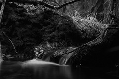 out in the woods (Nicholas Ahlstrm) Tags: bw me water sweden tripod longexp outdoore leefilters