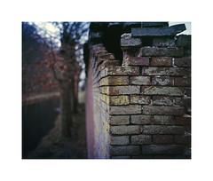 hidden trees (ha*voc) Tags: urban 120 film mediumformat bokeh rangefinder abstraction expired 80mm urbanfragments fujiprovia100 elswout mamiya7ii