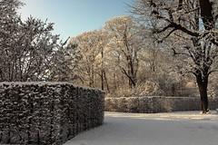 Groer Garten (frodul) Tags: park schnee winter deutschland himmel hannover blau baum sonnenschein niedersachsen hecken herrenhusergarten grosergarten