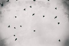 High End Birds in Birmingham (Thomas Hawk) Tags: bw usa bird birds america birmingham unitedstates unitedstatesofamerica alabama fav10
