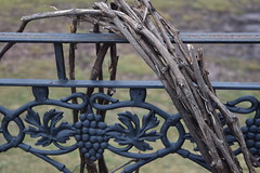 (KristenRiello) Tags: winter nature up outdoors photography vineyard close connecticut january vineyards grapes kristen february wallingford riello 2016 gouveia