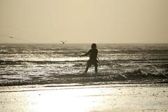 20131102_0580 (EJ Bergin) Tags: sea beach sussex kitesurfing watersports lancing kitesurfer lewiscrathern