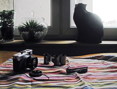 My plans for late winter and early spring (Other dreams) Tags: winter light plants window nature digital cat table outdoors photography for spring still trix backlit plans longing huntsman apparently victorinox trip35 existing
