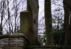 the rusty gate (mkniebes) Tags: door old friedhof cemetery zeiss rural rust dof bokeh rusty tor dates bochum rost shallowdepthoffield zf2 mmingen makroplanar2100
