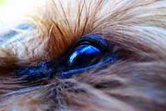 Reflection of the sky (priscillag05) Tags: sky dog pet macro reflection eye yorkie animal yorkshire terrier