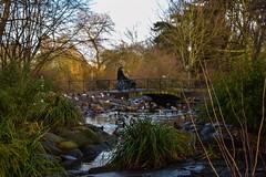 Urban nature (Maria Eklind) Tags: park bridge sky nature water se pond sweden outdoor urbannature sverige damm malmö euorpe slottsparken kungsparken skånelän