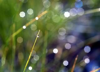 glittering droplet