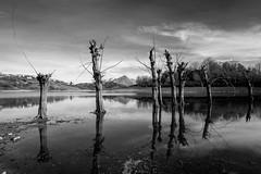 Lago di Campotosto, flooded dead trees (bn) (jimmomo) Tags: trees lake mountains alberi italia montagna biancoenero abruzzo campotosto laghi