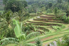 Jatiluwih (Andreas' Photos) Tags: bali ricefields jatiluwih