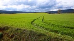Wheat fields in Martioda, Alava, Basque Country (jokinzuru) Tags: canon landscape eos paisaje campo alava prado cereales pays basque euskalherria euskadi basquecountry araba paysbasque hierba pasvasco airelibre llanura 70d tokina1116 martioda