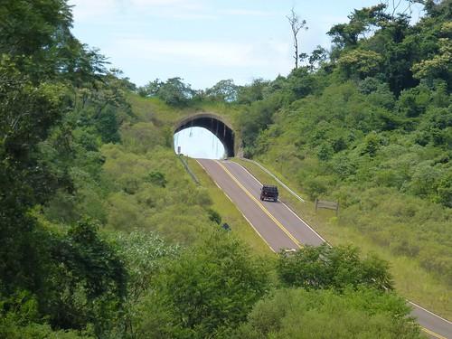 "Ecoducto en Misiones <a style=""margin-left:10px; font-size:0.8em;"" href=""http://www.flickr.com/photos/132693845@N03/25584341891/"" target=""_blank"">@flickr</a>"