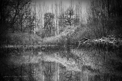 Le Dimore degli Elfi (elena.barsottelli) Tags: lago elf fantasy fantasia acqua riflessi atmosfera follia bosco elfi salici druidi