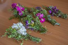 (Psinthos.Net) Tags: flowers spring blossoms april  herbals  psinthos