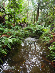 Pool in a rainforest (LSydney) Tags: trees pool forest palms pond rainforest vertorama stonyrange stonyrangeregionalbotanicgarden