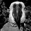 Parrot Selfie BW (joaobambu) Tags: