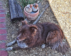 They've Seen Better Days (Jo-Cooler Than Usual Summer...Yay!!!!!) Tags: old dog frog pot clay toad weathered ddc cracked cracking railroadties 1601 seenbetterdays shizandra chocolatebordercolliemix