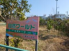 16i5556 (kimagurenote) Tags: apricot ume  japaneseapricot  prunusmume sogabairin   odawarakanagawa