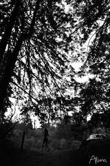 _AKU7097 (Large) (akunamatata) Tags: california sunset berkeley miller trail joaquin joachim