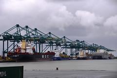 MPET Terminal (larry_antwerp) Tags: port ship belgium belgi vessel terminal container antwerp  antwerpen psa  schip                delwaidedok    mediterraneanshipping  mpet      mscmariasaveria 9467421  wesjanine mscantalya 9129885 mscrafaela 9605152   mscnederland 9504073 8918954