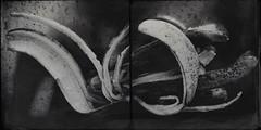 Peel(ed)-4812 (Poetic Medium) Tags: blackandwhite stilllife food diptych ipod banana produce organic peel mextures kitcamghostbird