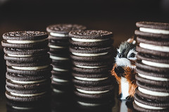 "Marshmallow (Ibi Szabo"") Tags: cookies chipmunk marshmallow oreo hiding allrightsreserved 50mmf18 nikond7000"
