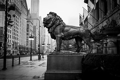 Lion standing guard (VicRokOne) Tags: city blackandwhite bw chicago rainyday lion michiganave artinstitute tallbuildings vsco