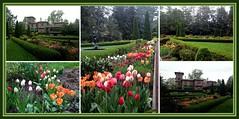 Prospect House Gardens, Princeton University (C r u s a d e r) Tags: usa collage gardens tulips mosaic nj rainy mansion princetonuniversity prospecthouse princetonnewjersey