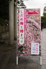 20160229-095139_5K_80 (pya) Tags: kyoto  camellia plumblossoms jonangu     weepingplumblossoms