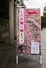 20160229-095139_5K_80 (pya) Tags: kyoto 京都 camellia plumblossoms jonangu 梅花 茶花 城南宮 椿花 weepingplumblossoms