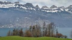 Switzerland landscape (osiakos) Tags: blue mountain lake snow green landscape switzerland hegy fa tó tájkép zöld mező erdő svájc