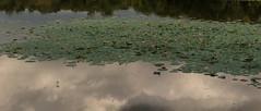Cambodia 2015 (Marianne Zumbrunn) Tags: lake color colour reflection clouds pond nikon cambodia kambodscha waterlily angkorwat waterlilies tamron 2470mm 2015 d610 tamron2470mm nikond610