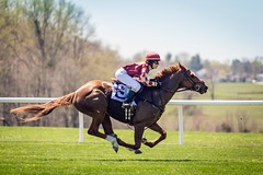 Crazy for Daisy (Jen MacNeill) Tags: horses horse girl race kid md fast maryland racing jockey chestnut races rider turf thoroughbred horsepower gallop fairhill pointtopoint