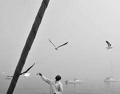 O pescador e as gaivotas!!! (puri_) Tags: barcos gaivotas namibia pescador swakopmund sardinha nevoeiro mastro oceanoatlantico picmonkey
