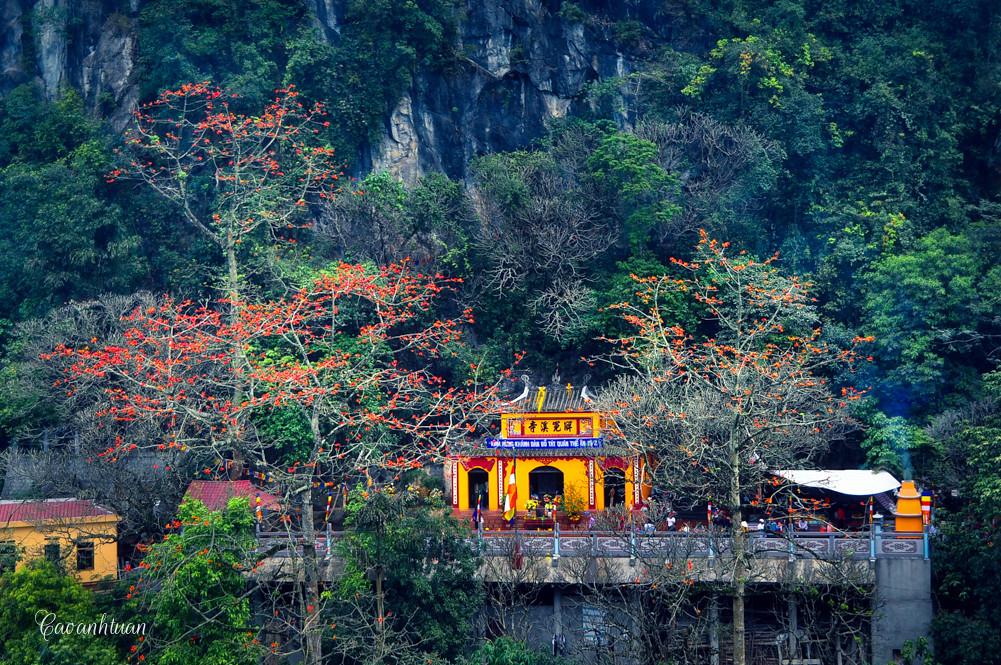 Hoa gạo chùa Trầm