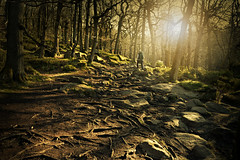 Free range Type 2 (pentlandpirate) Tags: tree forest woodland peakdistrict roots haunted mystical gritstone grindleford padleygorge