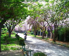 (nesreensahi) Tags: park flowers trees sky landscape syria siria  syrie latakia