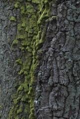 Mossy bark (Sven Rudolf Jan) Tags: green forest gteborg moss sweden gothenburg skog trunk rekjrr