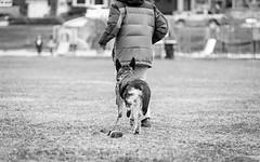 Artoo - 19.5 weeks (MorboKat) Tags: park dog pet toronto cute monochrome animal mammal spring outdoor shepherd canine running run germanshepherd alsatian animalia mammalia carnivore dsh gsd germanshepherddog purebred schferhund canis carnivora canislupus domesticdog canisfamiliaris canidae bergerallemand purebreed canislupusfamiliaris deutscherschferhund purebreddog alsatianwolfdog
