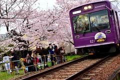 Arashiyama honsen (Vincent_Ting) Tags: sky japan cherry landscape temple spring kyoto railway sunny bluesky cherryblossoms  kansai cherrytree    japantemple   touristdestination      vincentting   arashiyamahonsen