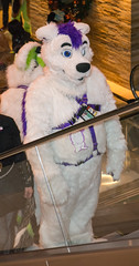_DSC9098 (Acrufox) Tags: midwest furfest 2015 furry convention december hyatt regency ohare rosemont chicago illinois acrufox fursuit fursuiting mff2015