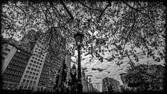100.000 hojas (pepoexpress - A few million thanks!) Tags: madrid bw architecture clouds nikon nubes urbannature nikkor plazadeespaa edificioespaa architecturesky skylinearchitecture nikond600 cielosdemadrid 1424afs plazadeespaamadridspain pepoexpress d6001424mm edificoespaabywanda