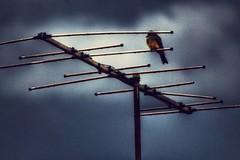 wave lenghts (Rodrigo Alceu Baliza) Tags: bird wave fx lenght