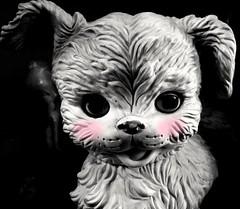 Pink puppy cheeks (joditbobo) Tags: dog vintage toy blackwhite toydog