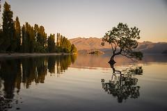 Summer sunrise, Wanaka (Ian@NZFlickr) Tags: new summer lake reflection tree sunrise island holidays south zealand willow wanaka thatwanakatree lovewanaka
