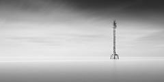 Alien (josesuro) Tags: longexposure bw beach digital landscapes tampabay florida fineart ftdesoto 2015 floridagulfcoast leebigstopper afsnikkor50mmf18g jaspcphotography nikond750