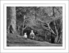 F_DSC2027-BW-Nikon D300S-Nikkor 28-300mm-May Lee  (May-margy) Tags: portrait bw blur woods bokeh taiwan       wulingfarm     viewfromback taichungcity  repofchina nikond300s maymargy nikkor28300mm maylee  mylensandmyimagination streetviewphotographytaiwan  naturalcoincidencethrumylens  linesformandlightandshadows fdsc2027bw
