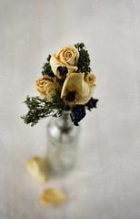 Flores (natnoba) Tags: flowers flores flower rose vintage flor rosa romantic bouquet fiori fiore ramo mazzo romntico