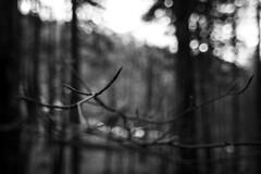 (Nicco__) Tags: winter blackandwhite bw mountain tree blancoynegro bokeh bn tuscany toscana albero inverno ramo montagna biancoenero casentino sfocato diaframma badiaprataglia diaframmaaperto